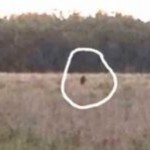 Man Captures Skunk Ape on Video