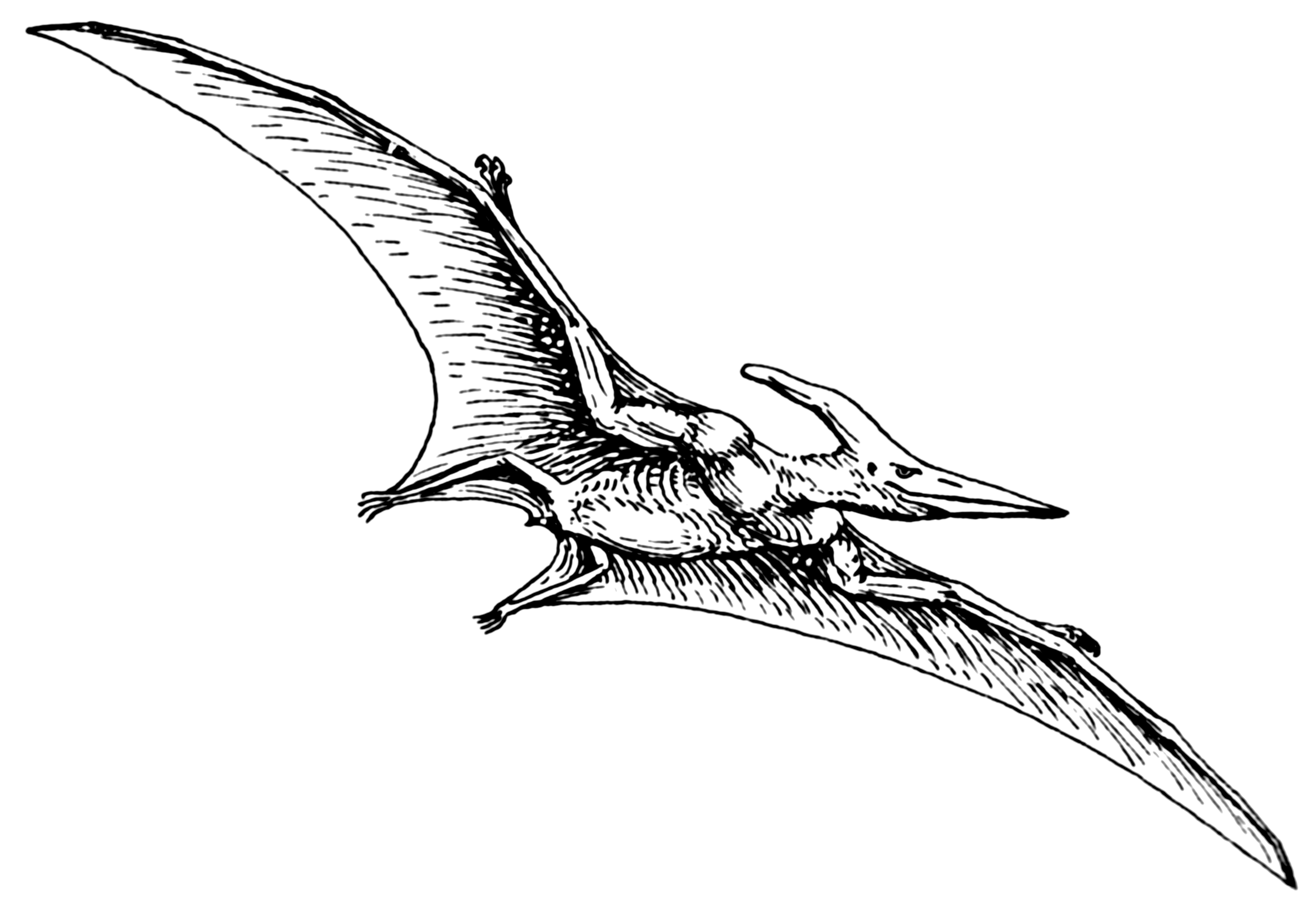 pterodactyl in the corn fields of missouri cryptozoology news