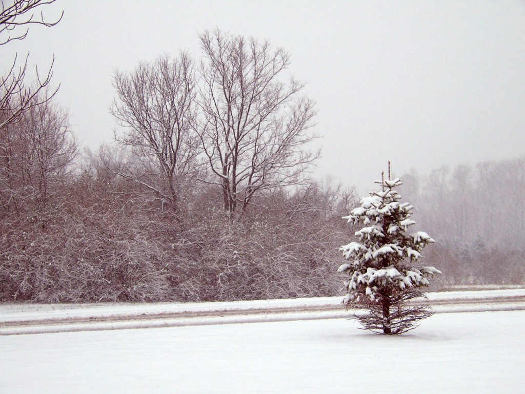 trees-and-road-in-snowstorm-1303930748jLE