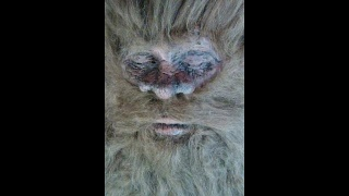 Dead Bigfoot Dyer