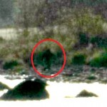 Bigfoot Picture Taken in California Lake