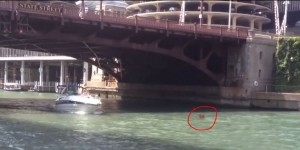 'Hippo' in The Chicago River or just Debris?
