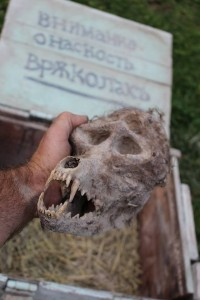 "Trayche the farmer holds the ""werewolf"" skull as Ganov snaps a closer picture. Credit: Filip Ganov."