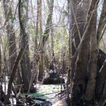 Fisherman Photographs 'Bigfoot' in Florida
