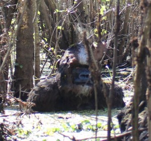 The 'Bigfoot' creature exhibits a white highlight across its forehead. Credit: John Rodriguez