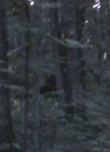 Alleged Bigfoot creature hangs out behind the vegetation. Credit: Don B. Young/YouTube
