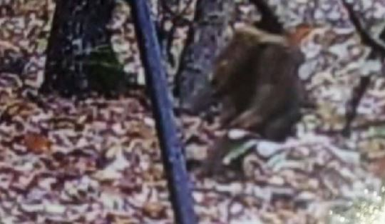 "The alleged ""Dogman"" kneels by a tree. Credit: Dale Boswell/YouTube"
