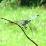 Real Estate Agent, Neighbor See 'Giant Dragonfly' in Michigan