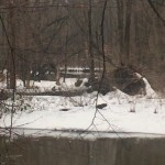 Ohio Man Encounters and Photographs Multiple 'Bigfoot Creatures'