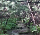 """The """"alien"""" sits on a log in this quiet Michigan creek. Credit: MUFON"""