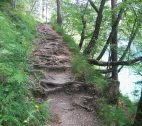 migratory-path-trail-forest-path-path-root-path