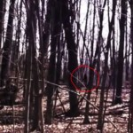 Michigan Man Shares 'Bigfoot' Video