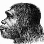 New 'Neanderthal' Sighting in Finland